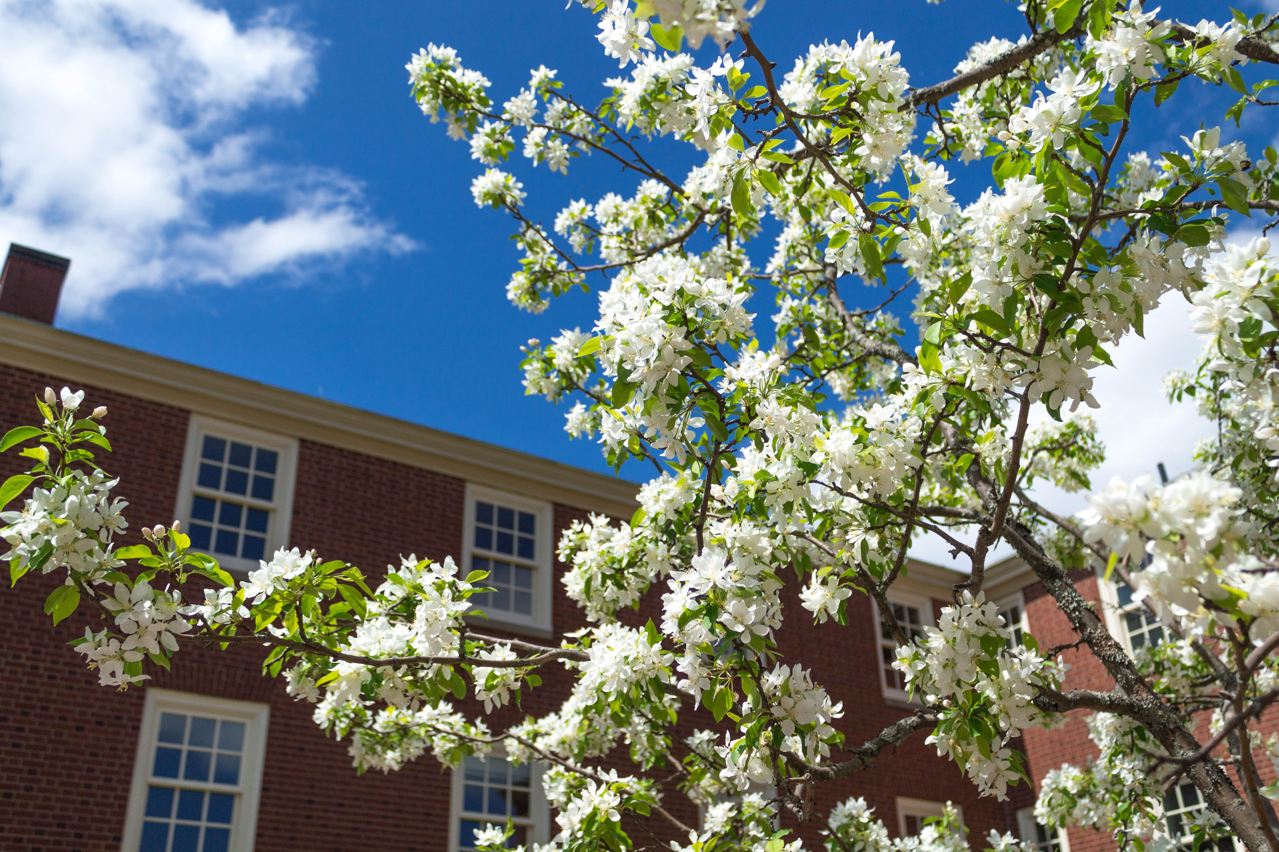 looking up at a tree and the sky outside school - self care strategies for teachers
