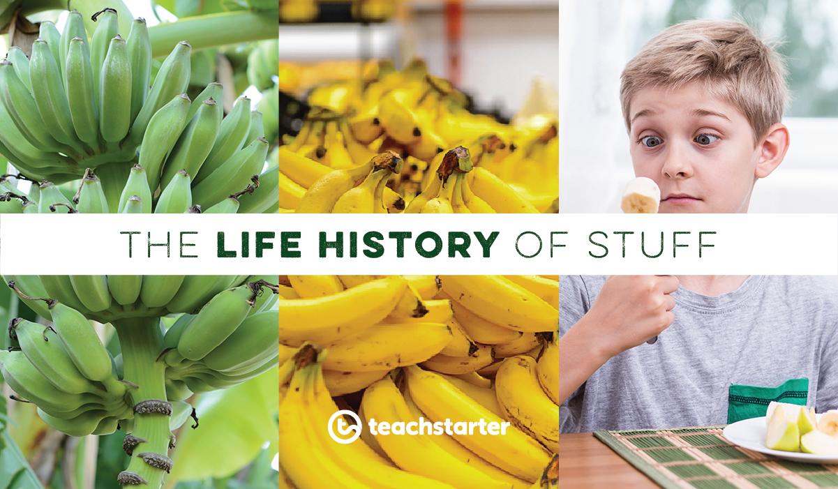 "An image showing green bananas, yellow bananas and a boy eating a banana - text banner says ""The Life History of Stuff"""