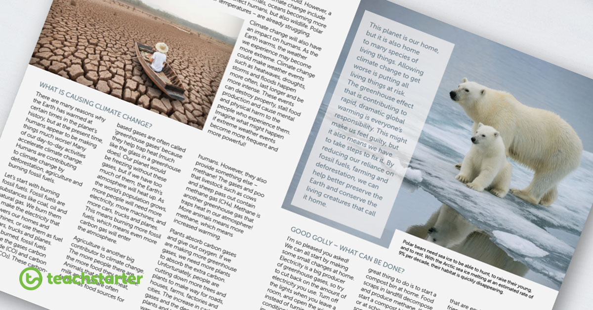 What's Buzzing? New Grade 6 Magazine - These articles are able to be used in any lesson!