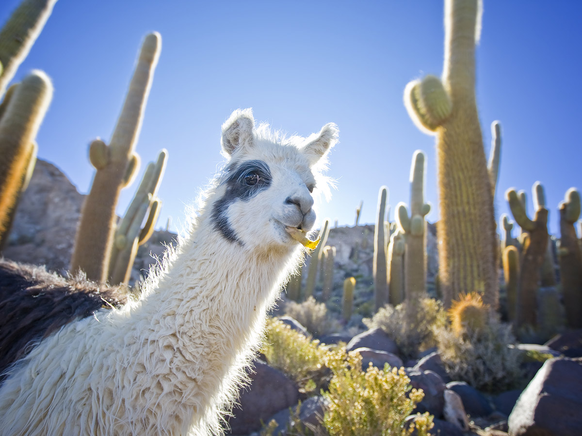 Llama and Cactus Classroom Theme Pack - What a Great Idea!