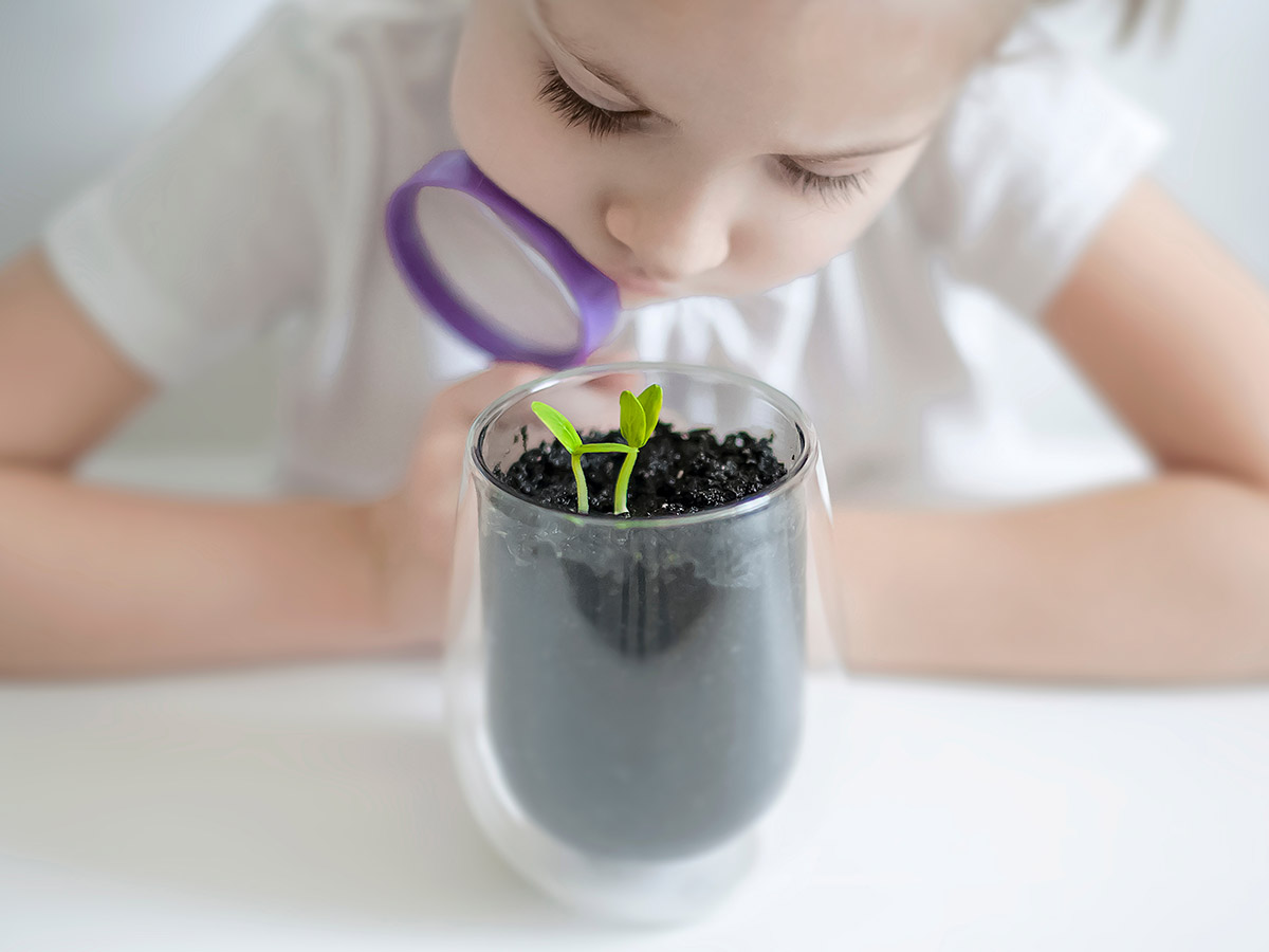 Plant Power | 5 Benefits of Having Plants in the Classroom - Plants Raise Environmental Awareness