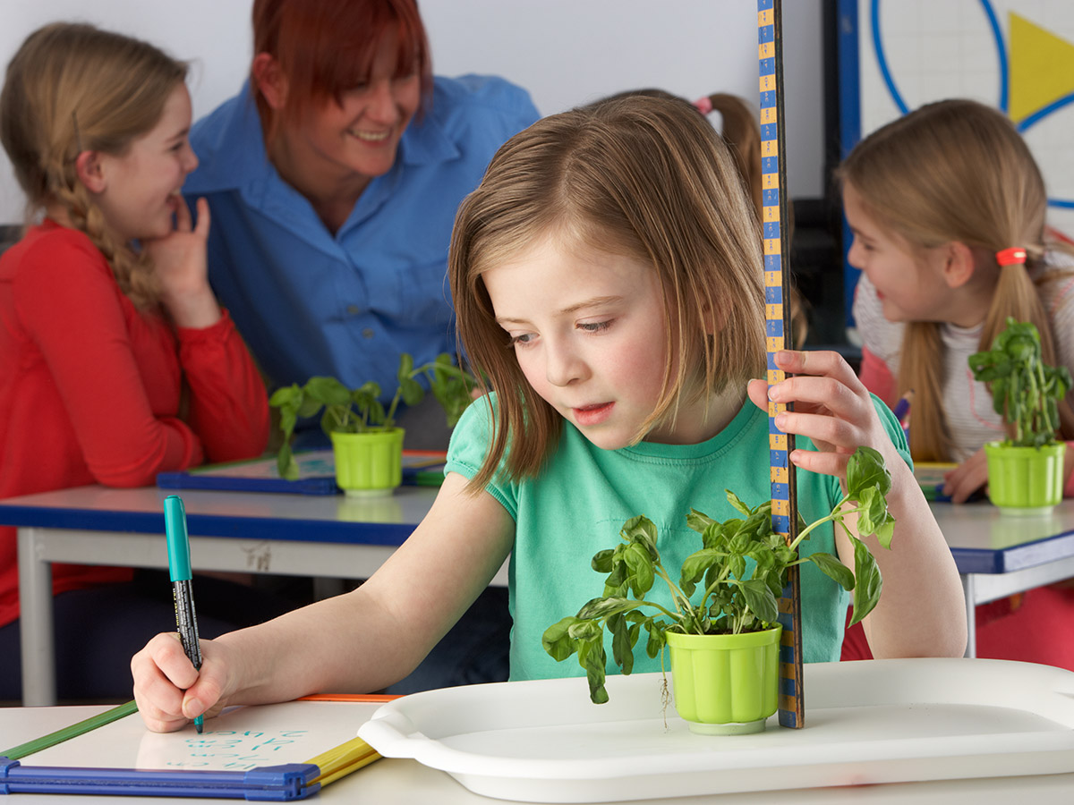 Plant Power | 5 Benefits of Plants in the Classroom - Plants help students learn in a number of learning areas!