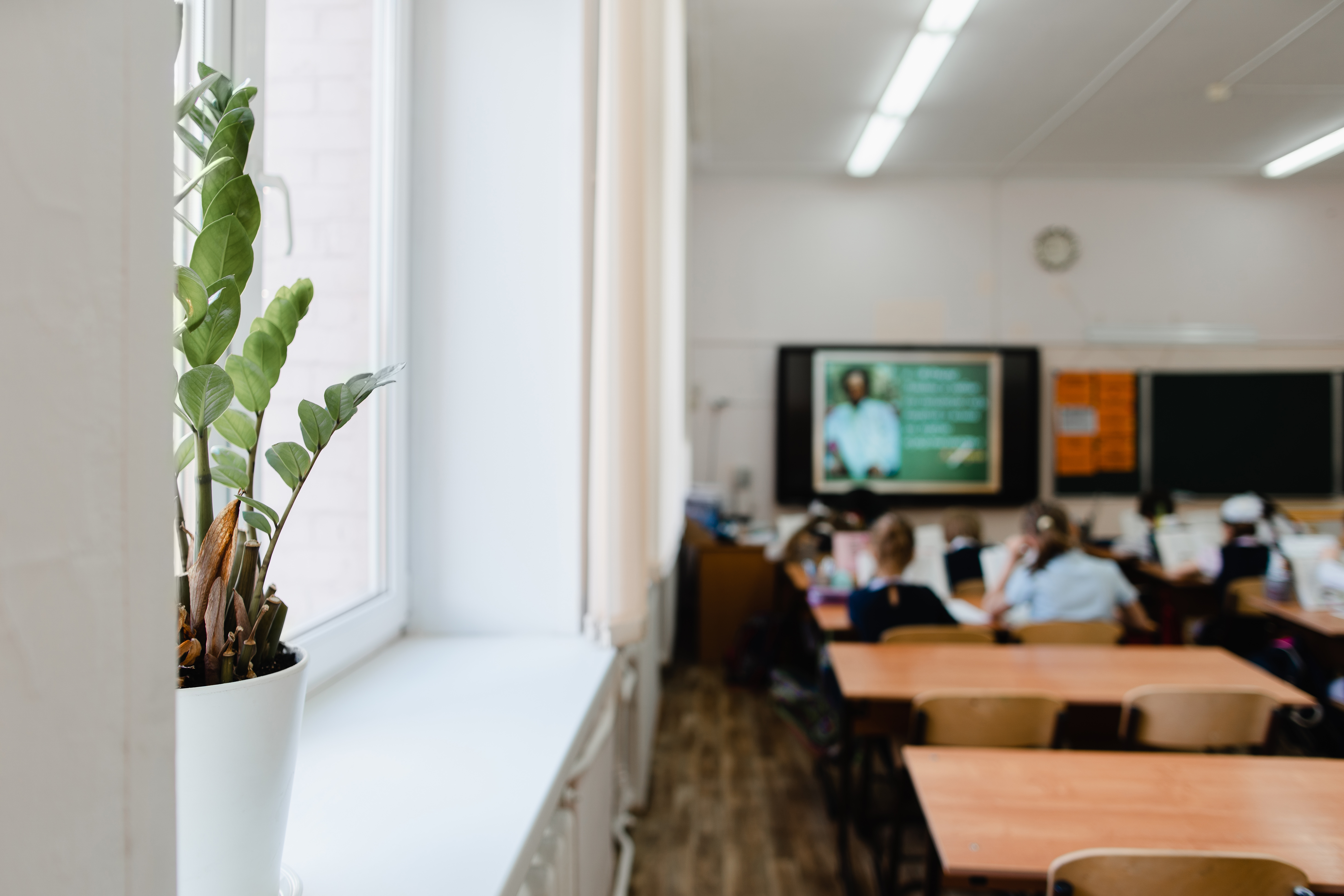 Plant Power | 5 Benefits of having plants in the classroom - plants freshen the air