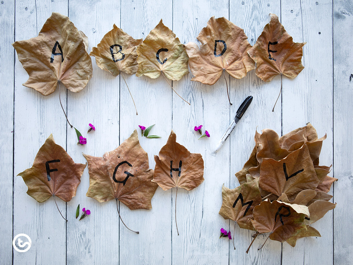 Using Natural Resources in the Classroom - Alphabet Leaf Sort