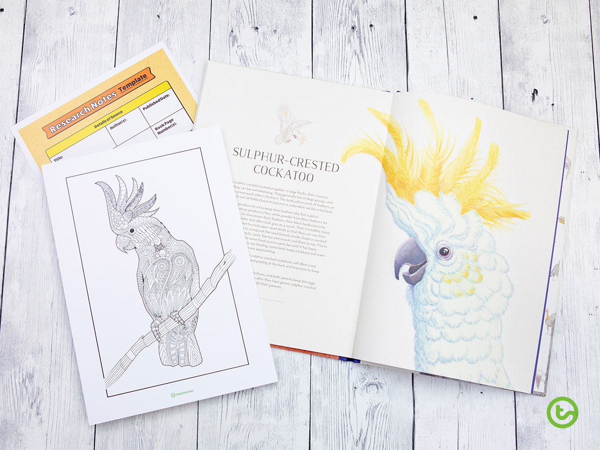 Mindful Coloring Pages - Cockatoo